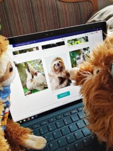 Benny-Adopt-a-Sloth-Step-2-lovely-sloth