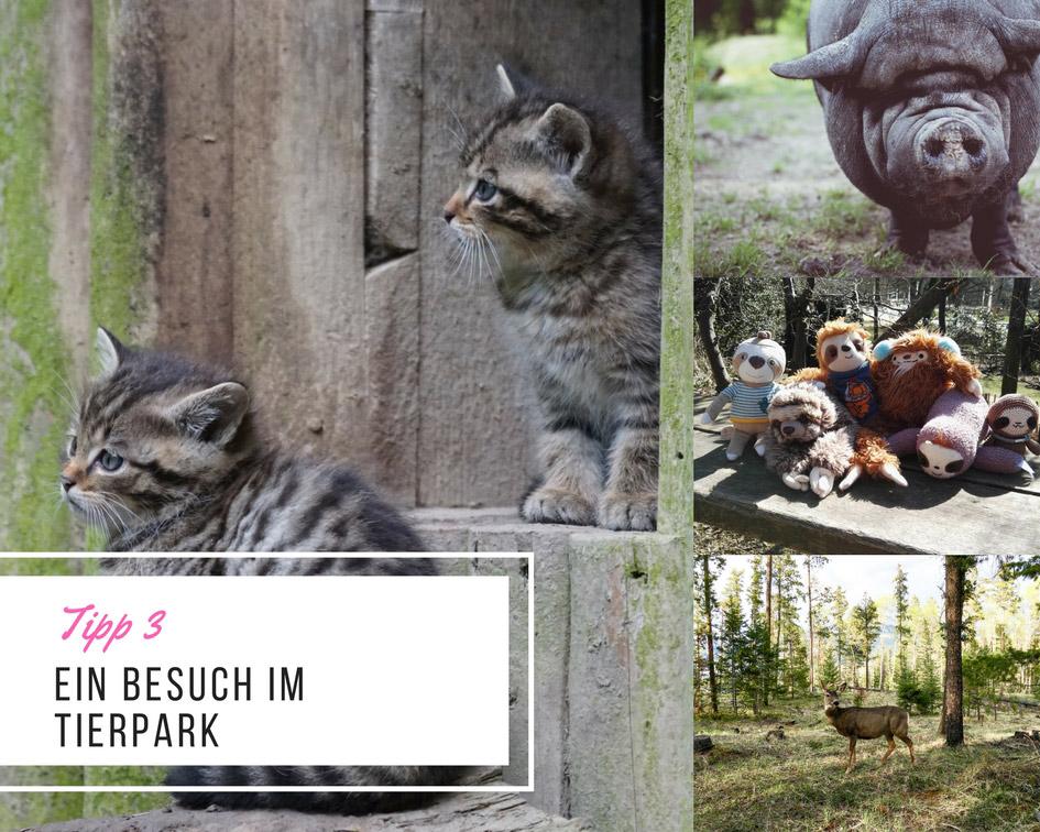 tipp-3-besuch-im-tierpark-lovelysloth